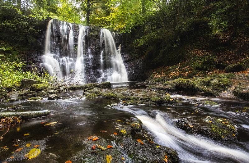 Glenariff Forest - Landscape 1