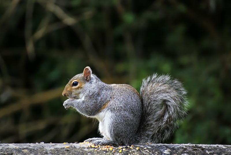 Squirrel in backgarden - Various