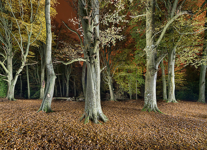 1354 Borthwood Copse - The Isle of Wight at Night landscapes