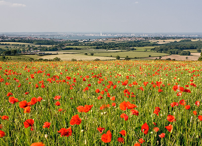 0768 Poppies Nunwell Down - Bembridge and East Wight landscape
