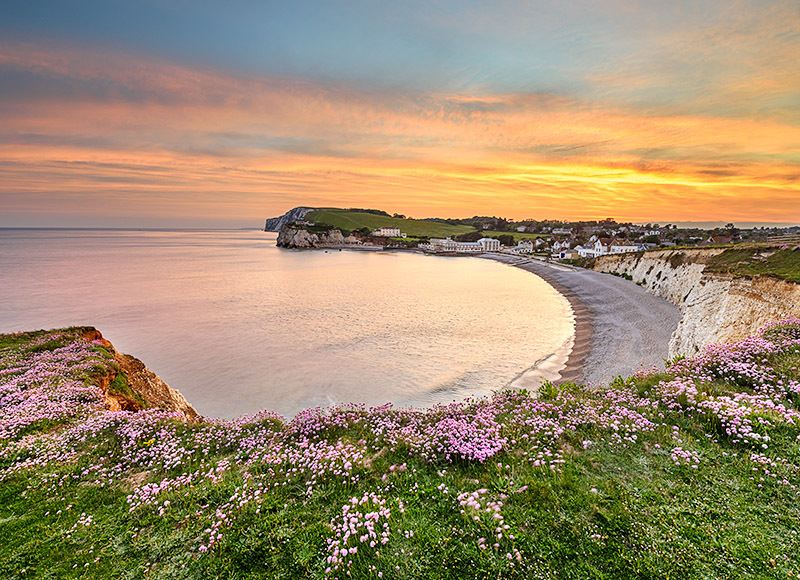 1777 Pink Thrift Freshwater Bay - Freshwater & Tennyson Down landscapes