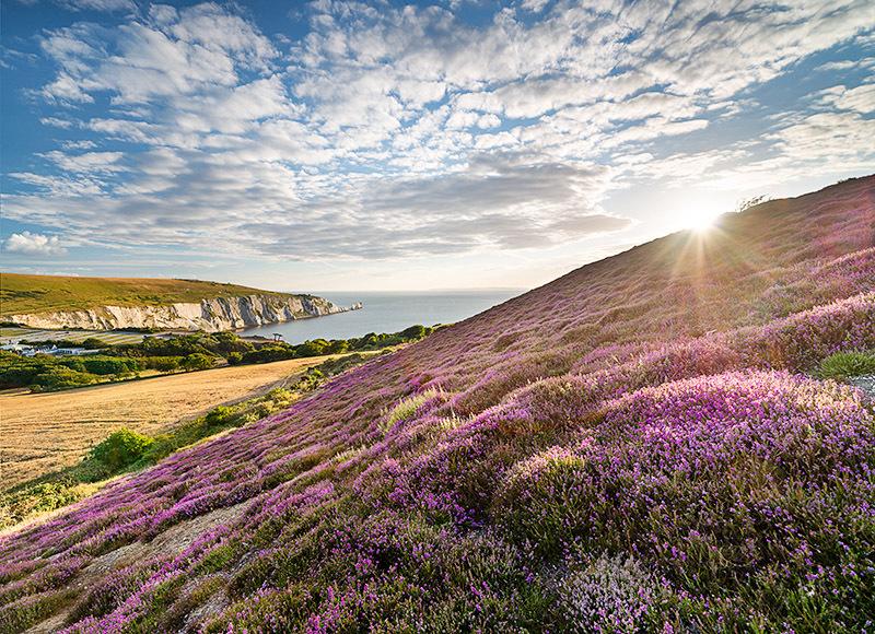1404 Headon Warren - Alum Bay and The Needles landscapes