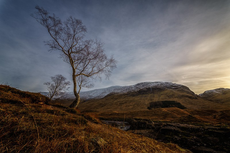 solo tree - Scottish landscapes