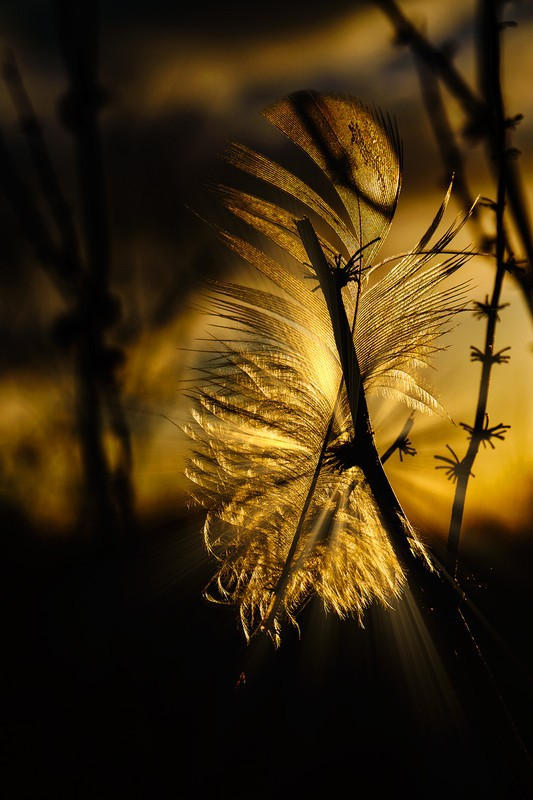 Feather on a frosty morn - Fine art