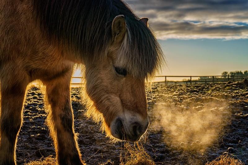 Horse breath - Horses