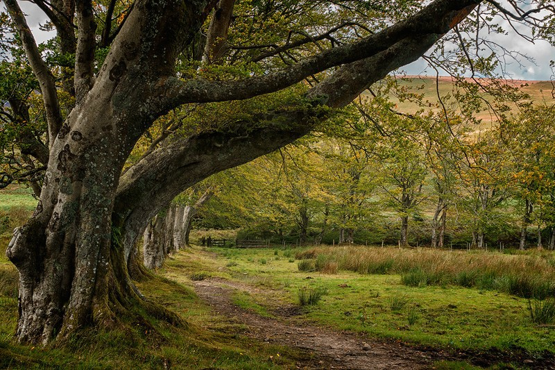 reaching out - Scottish landscapes