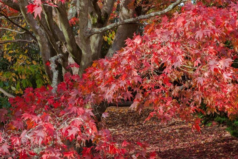 Autumn at Sheffield Park, East Sussex - London, Surrey, Sussex, & Yorkshire