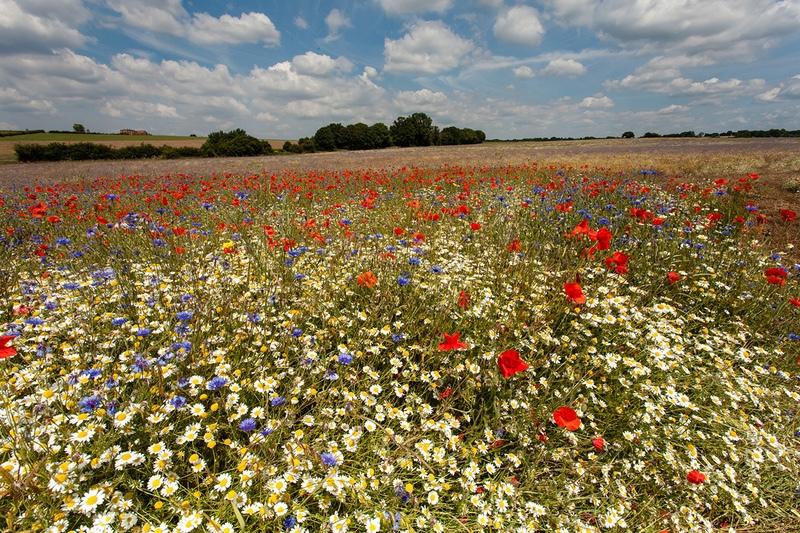 High Summer, Heartwood Forest - Hertfordshire