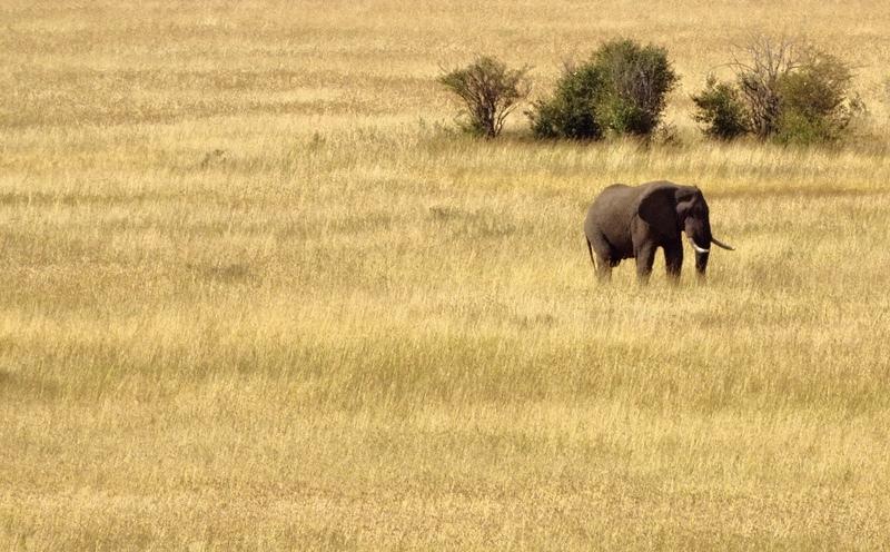 In the Masai Mara, Kenya - Kenya