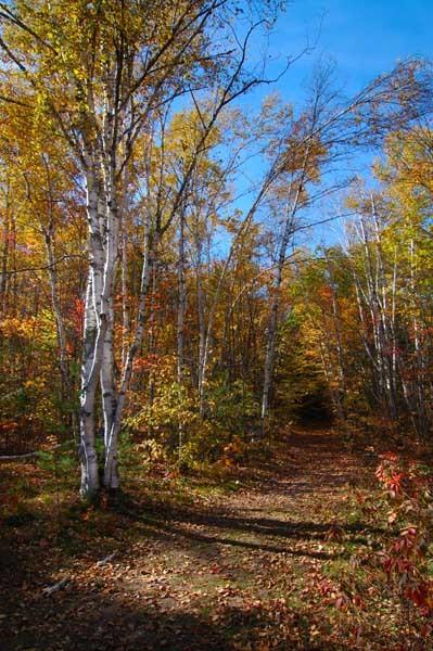 Follow That Trail - AUTUMN COLOURS