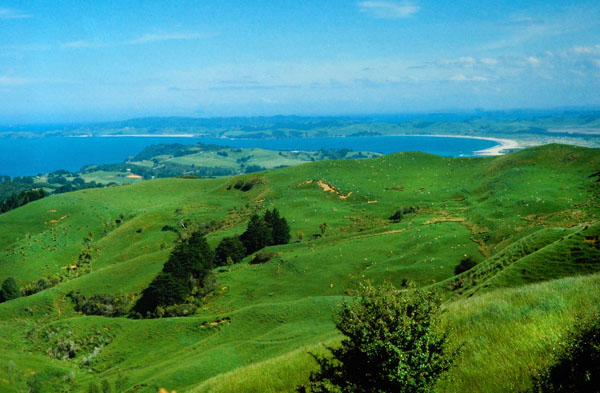Green Hills New Zealand - TRAVEL