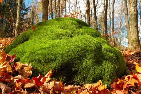 Moss Pillow - NATURE'S WINDOW