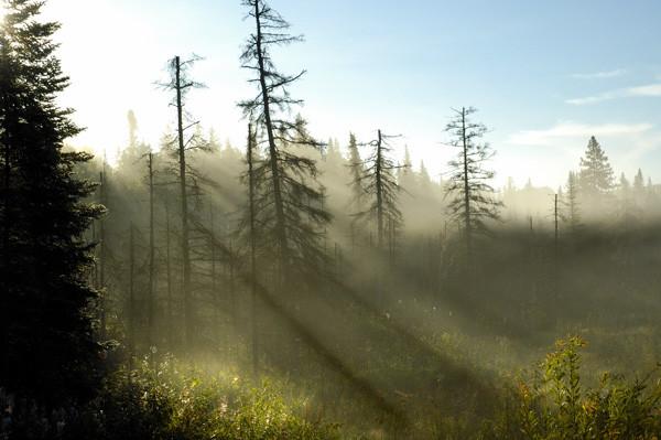 Misty Rays - NATURE'S WINDOW