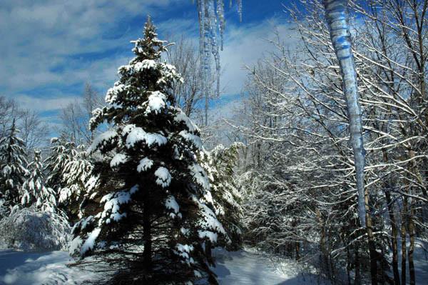 Winter Beauty - WINTER