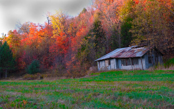Sugar Shack - AUTUMN COLOURS