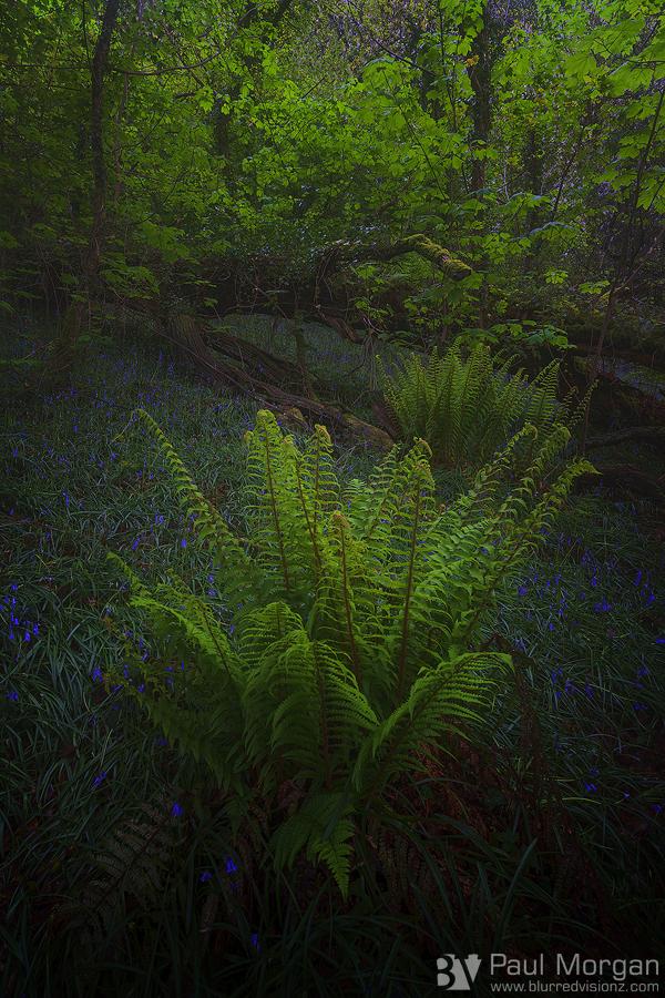 A Woodland Study - Landscape (Vertical)