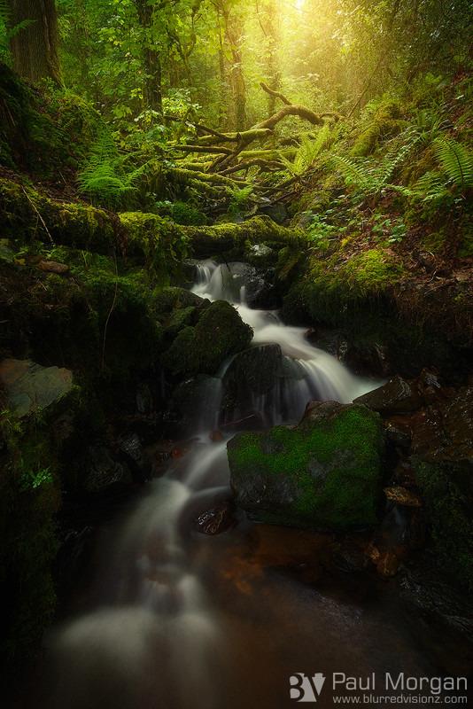 My Precious - Landscape (Vertical)