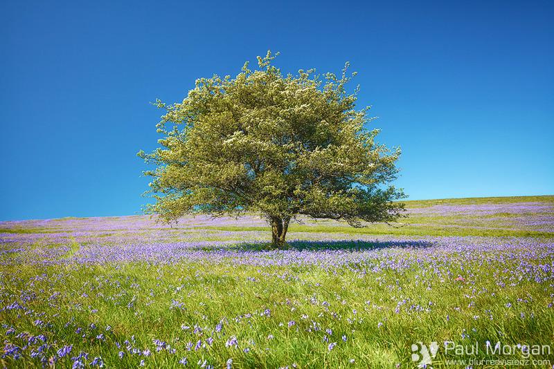 Happy Blues - Landscape (Horizontal)