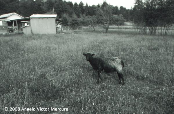2609 - Farm Animals