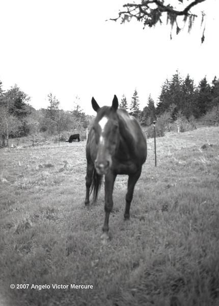 314 - Horses