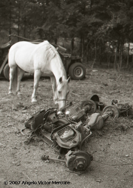 324 - Horses