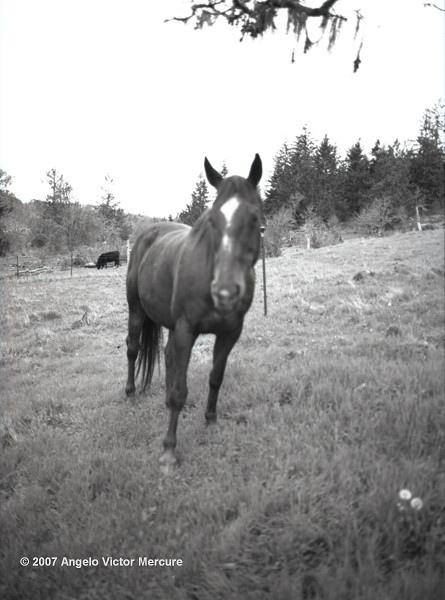 310 - Horses