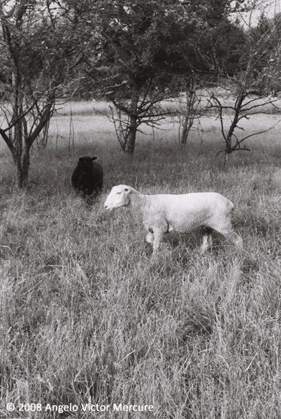 2606 - Farm Animals