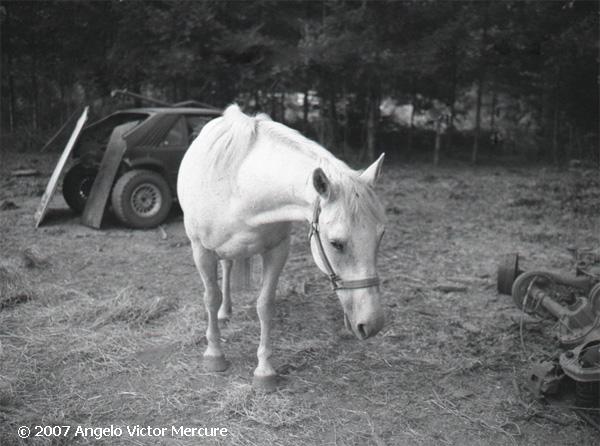 330 - Horses