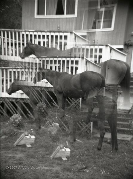 311 - Horses