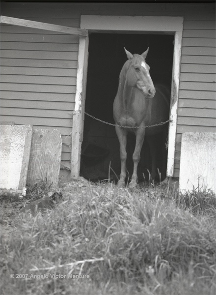 315 - Horses