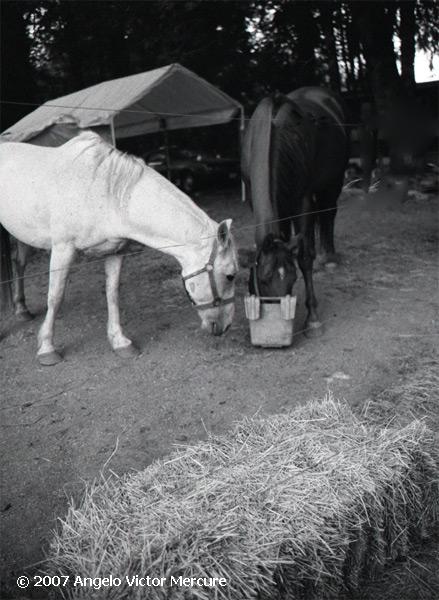 328 - Horses