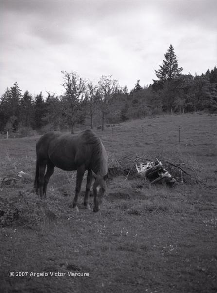 313 - Horses