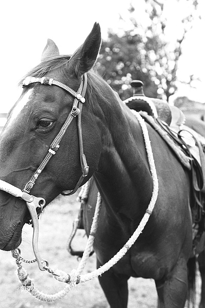 304 - Horses