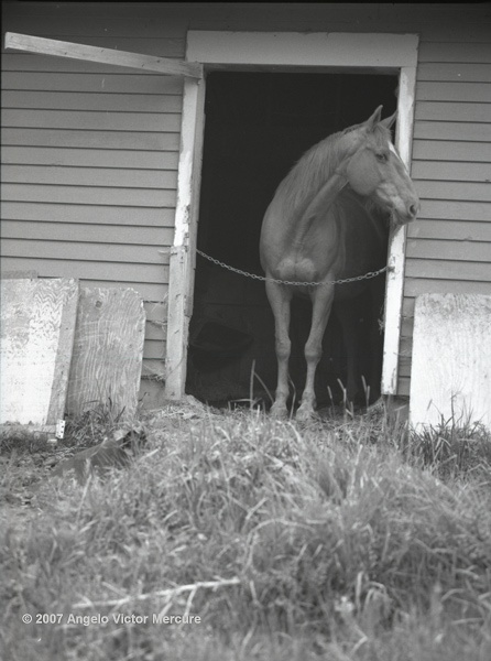 309 - Horses
