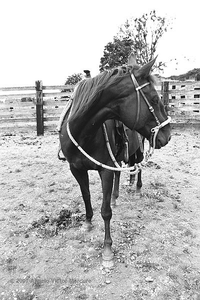 301 - Horses