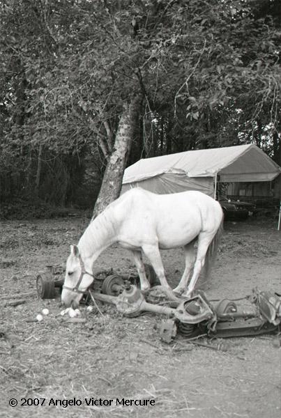 326 - Horses