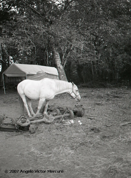 325 - Horses