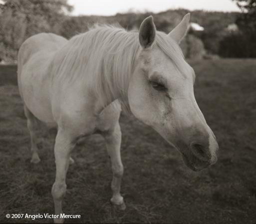 319 - Horses