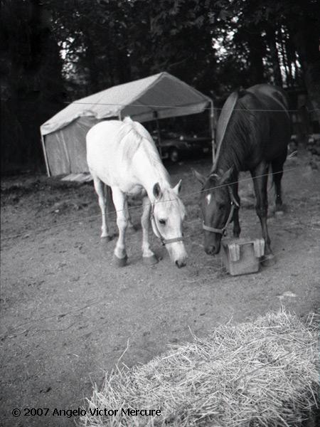 333 - Horses