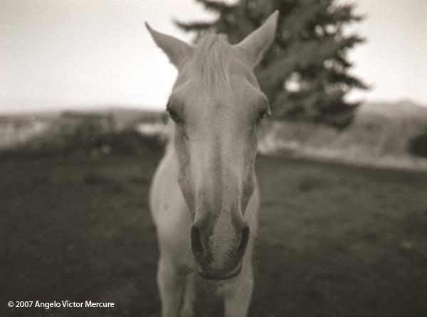 320 - Horses