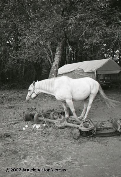 327 - Horses