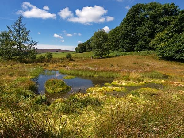 Rocher Bog - Landscapes & Habitats