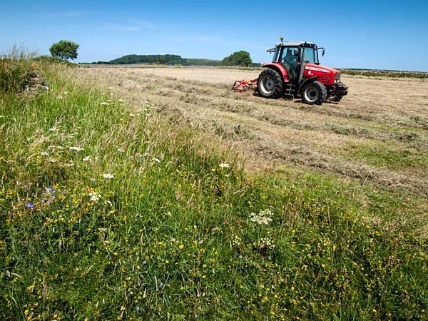 Haymaking near Foolow - Derbyshire