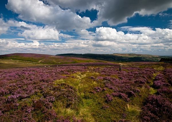 Bradfield Moors - Yorkshire