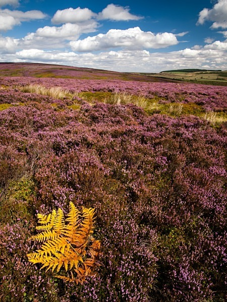 Bradfield Moors - Landscapes & Habitats