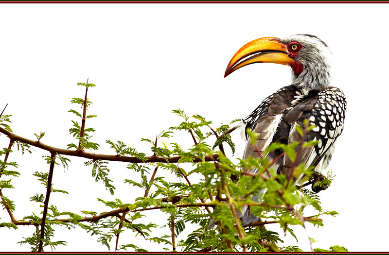 100327-Namibia-0645-Hornbill - Beyond the UK - Namibia