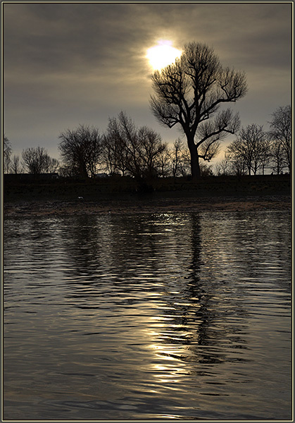 Solo Tree - Landscapes - UK