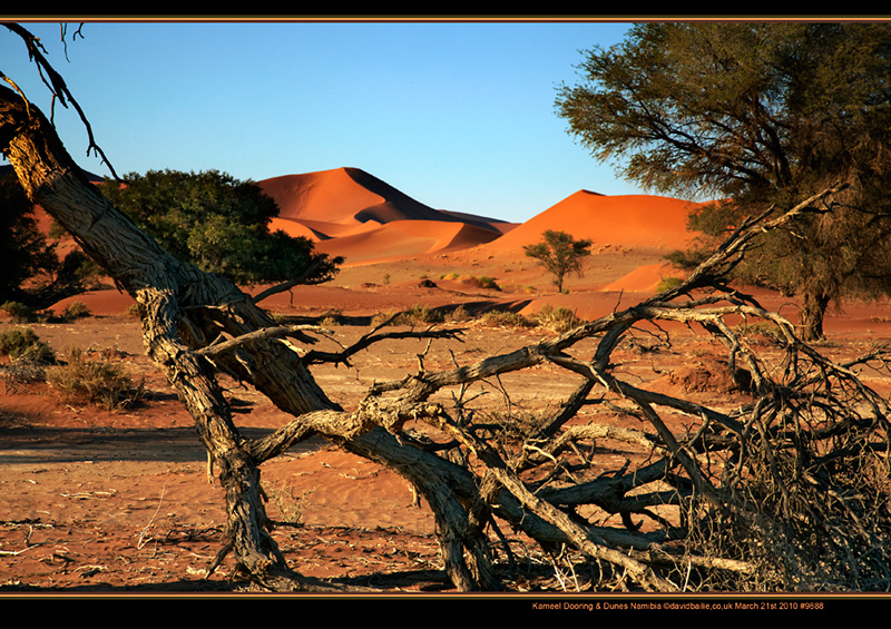 100321-Namibia-9888-Dunes - Beyond the UK - Namibia