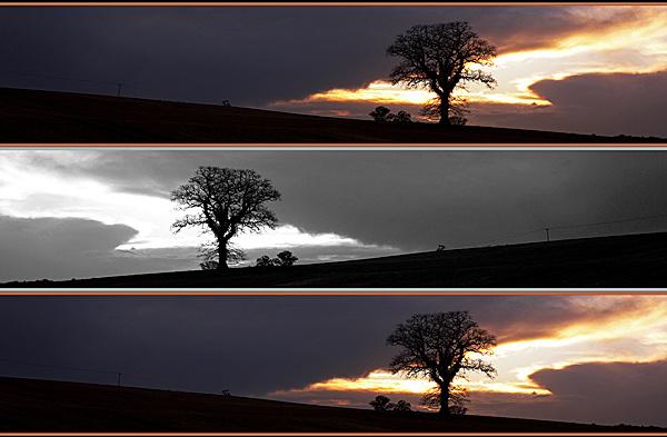 The Tree - Landscapes - UK