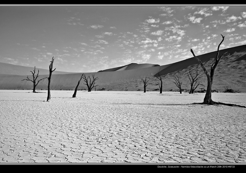 100320-Namibia-9733-DoodManyTree-BW - Beyond the UK - Namibia